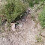 cauce del arroyo Ramabujas 15-06-2016